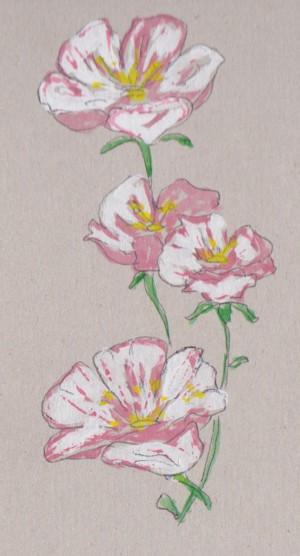 2 bloss 001