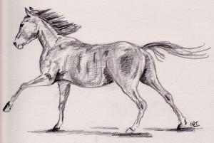 horse 4 001