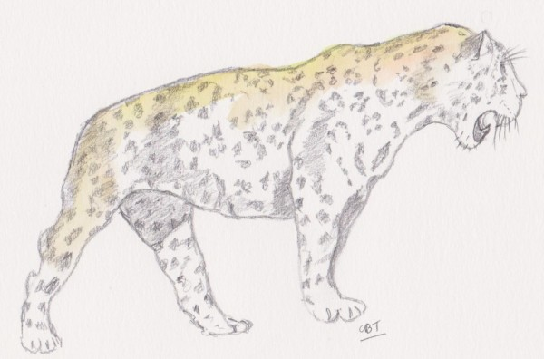 jaguar 001