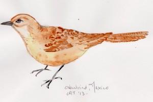 ovenbird 001
