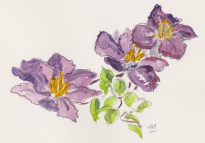 purple flowers 001