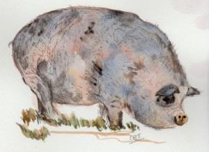 rare pig 001