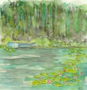 lily pond 001