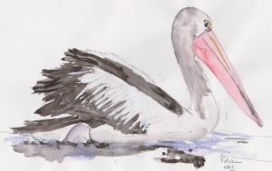 pelican 001