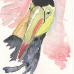 The toucan, national bird of Belize, Central America.
