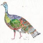 Multi-coloured turkey, Belize, Central America.