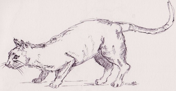 crouching cat 001
