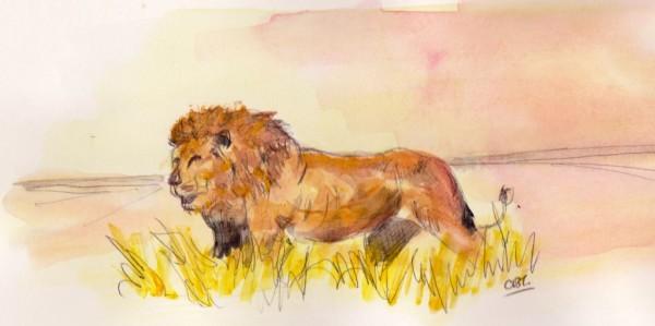 lion at dawn 001