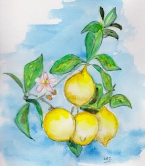 lemons 2 001