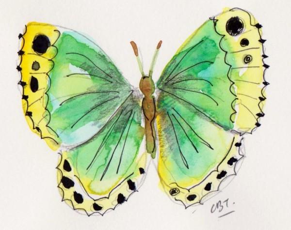 butterfly 5 001