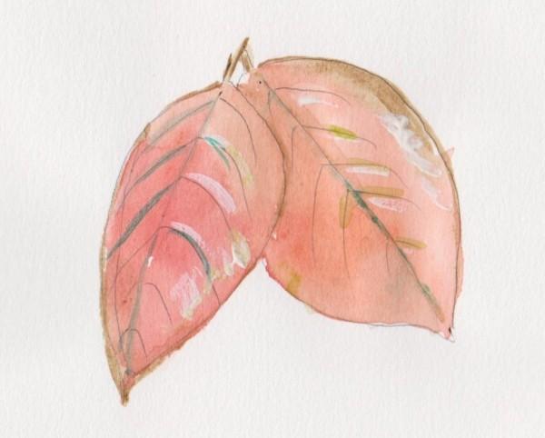 leaf 2 001