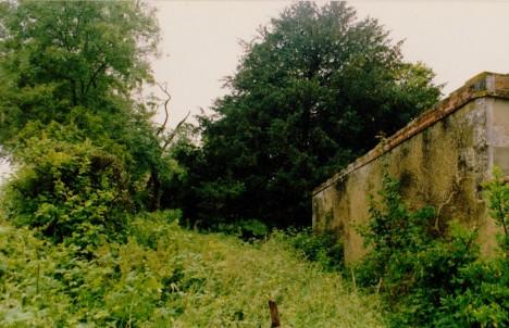 overgrown 001