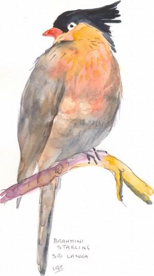 Bird10001