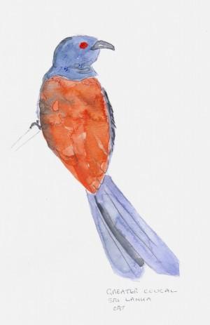 bird20001