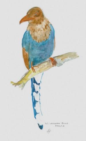 bird40001