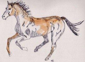 cantering horse 001