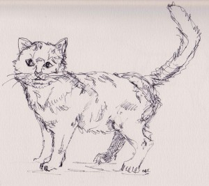 cat 5 001