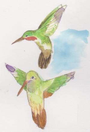 humm birds 001