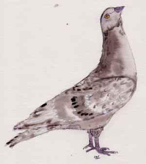 pigeon 001
