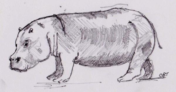 hippo 001