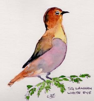 bird 1 001