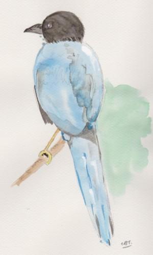 blue bird 001