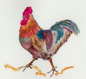 cockerel 3 001