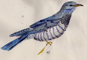 cuckoo 001 (2)