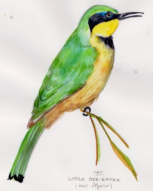 little bee eater 001
