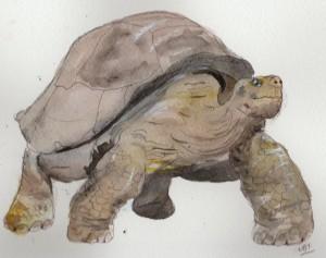 turtle 001