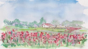 field of poppies 001