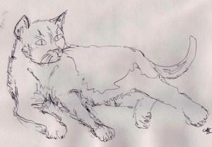 cat 2 001