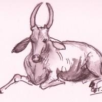 cow 2 001