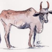 cow 3 001