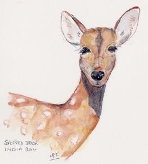 spotted deer 001