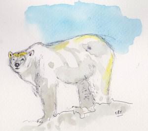 polar bear 001
