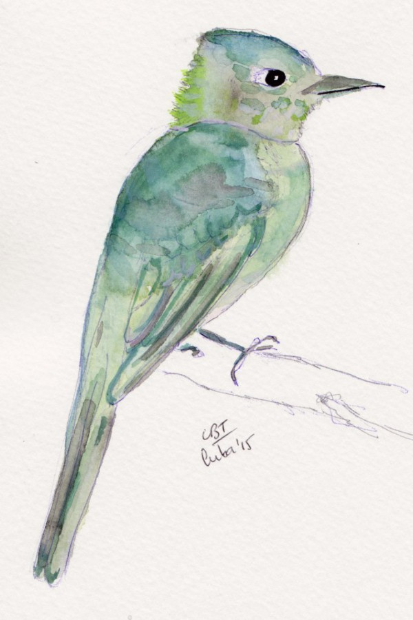 cuban bird 001